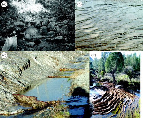 Geological Pattern Formation By Growth And Dissolution In Aqueous