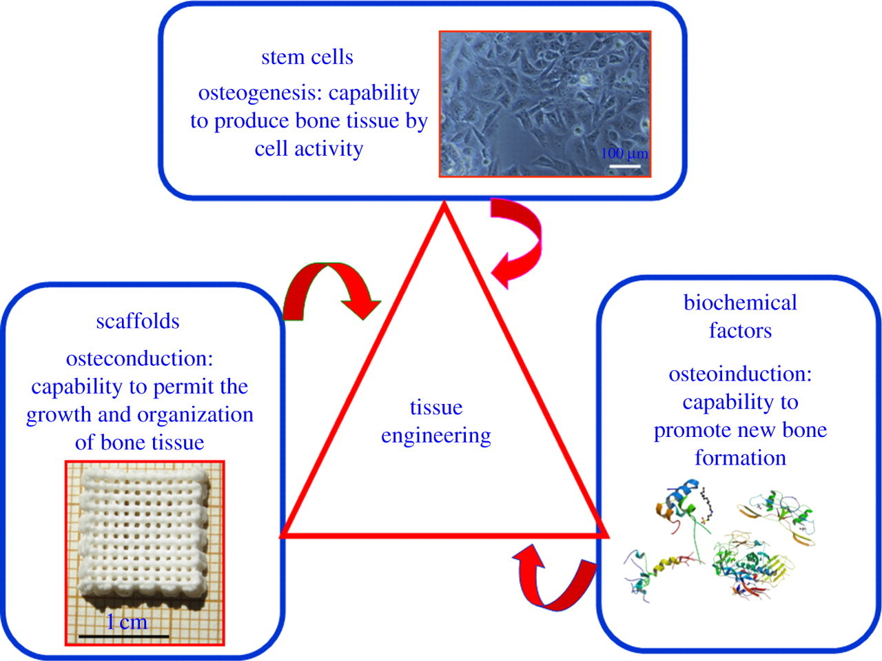 Structure And Functionalization Of Mesoporous Bioceramics For Bone Tissue Regeneration And Local Drug Delivery Philosophical Transactions Of The Royal Society A Mathematical Physical And Engineering Sciences