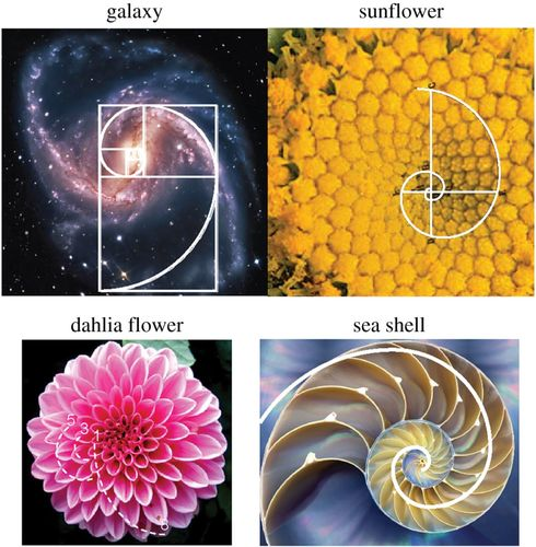 Bioarchitecture: bioinspired art and architecture—a perspective |  Philosophical Transactions of the Royal Society A: Mathematical, Physical  and Engineering Sciences