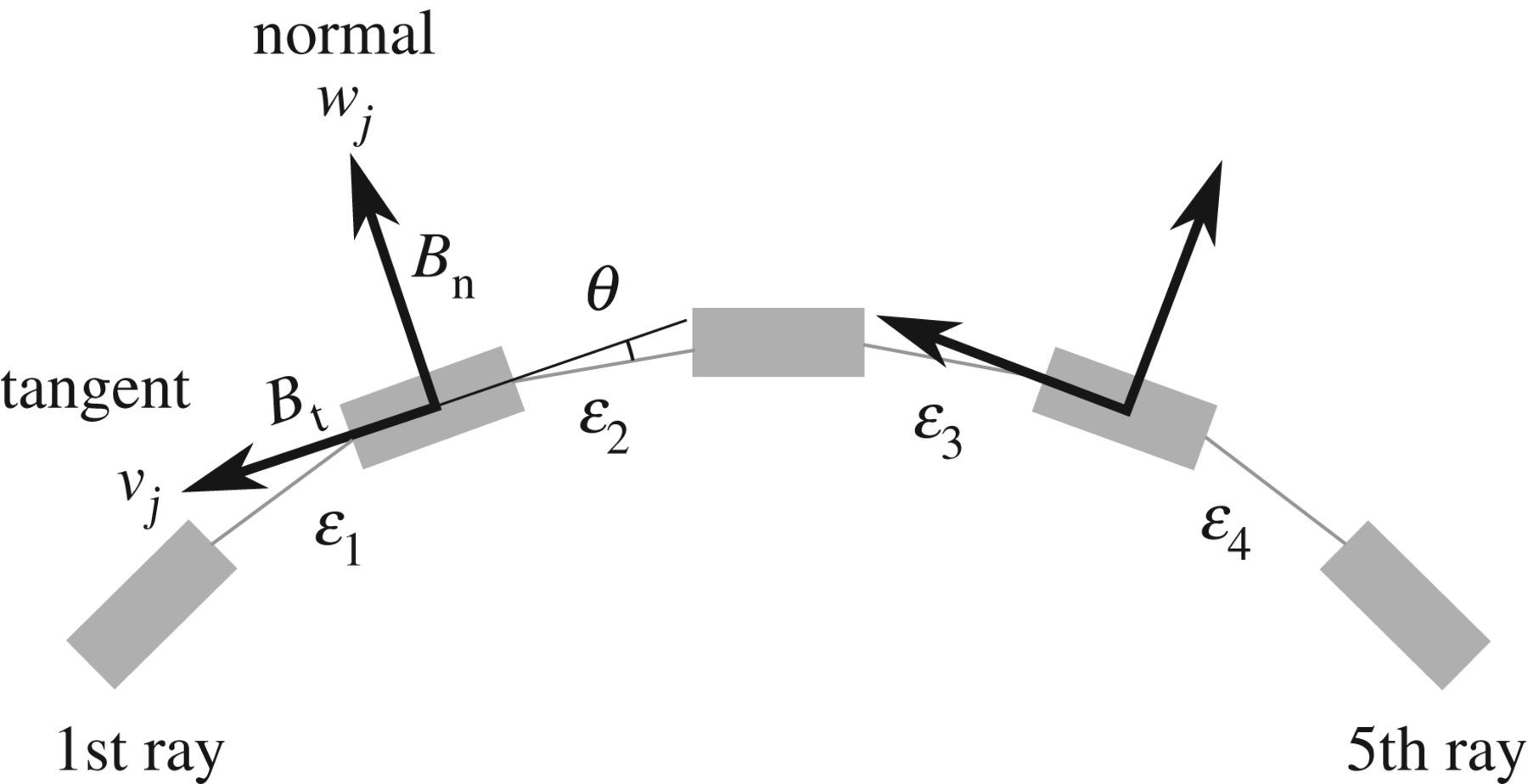 Curvature-induced stiffening of a fish fin | Journal of The