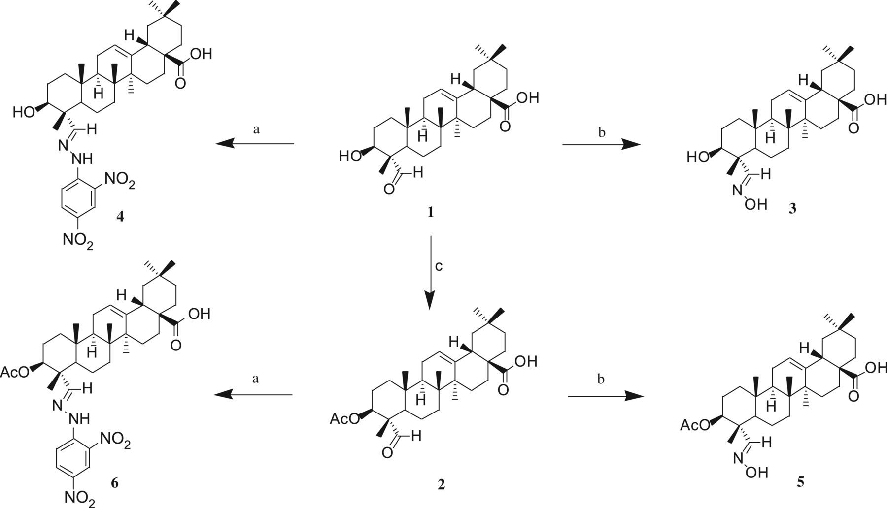 Synthesis of gypsogenin derivatives with capabilities to
