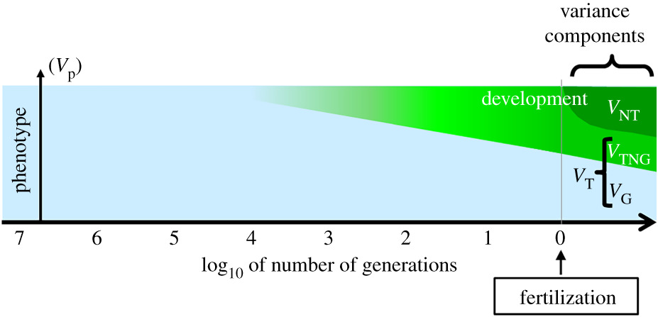 Early in life effects and heredity: reconciling neo