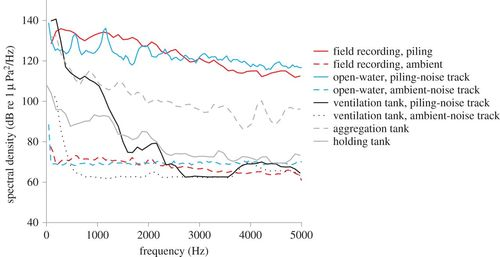 Rapid recovery following short-term acoustic disturbance in