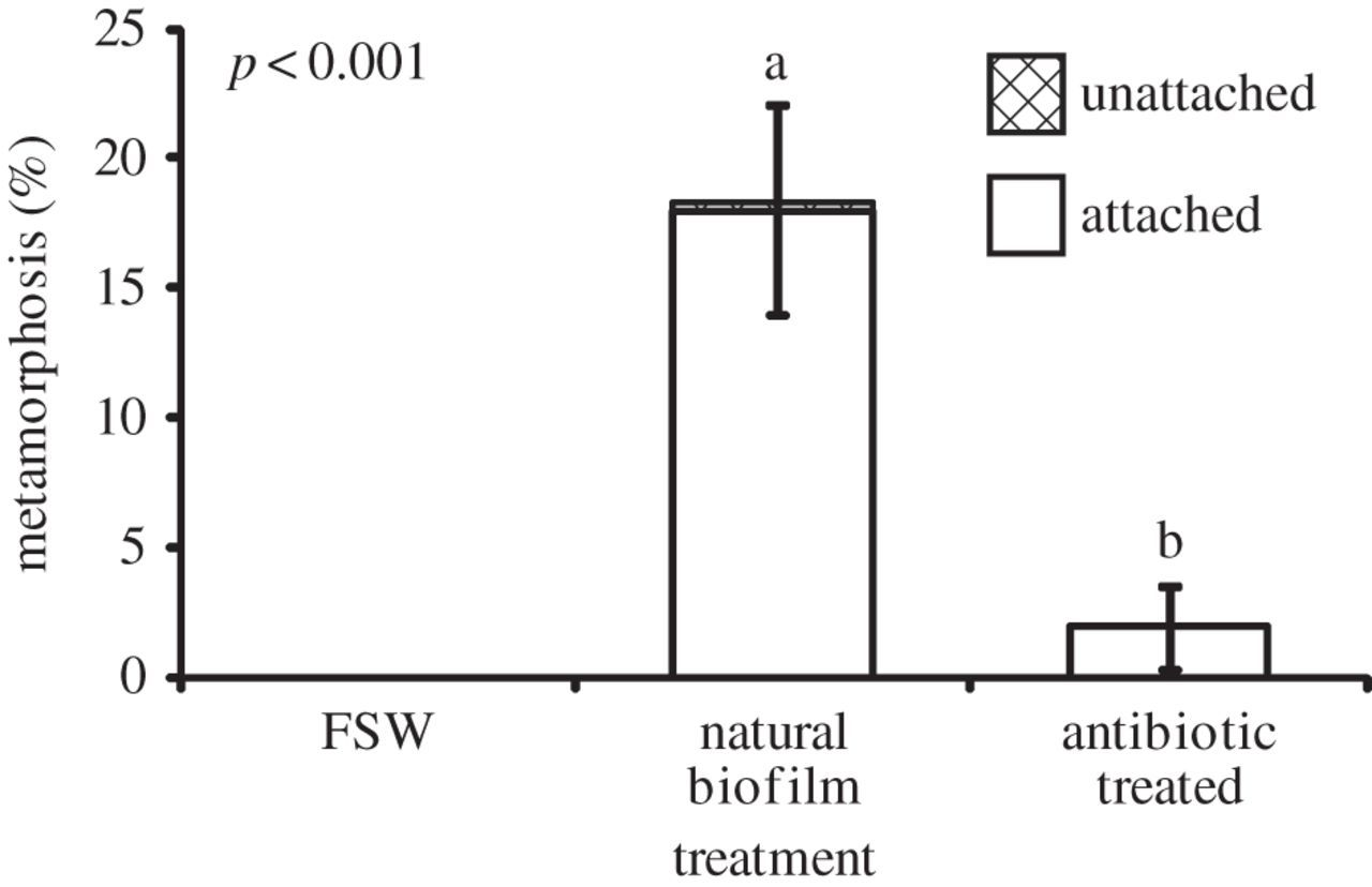 The chemical cue tetrabromopyrrole from a biofilm bacterium