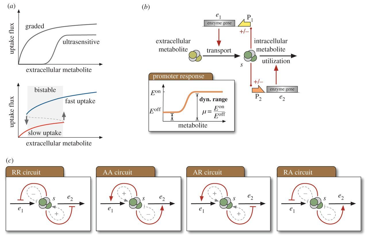 Bistable Latching Circuitry