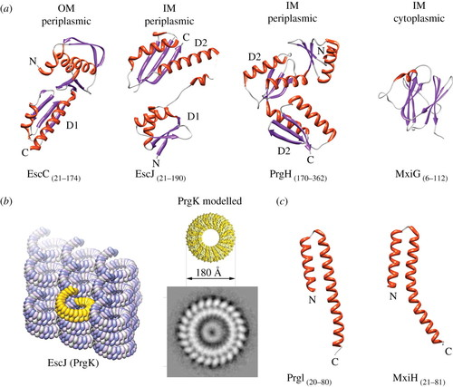 The blueprint of the type-3 injectisome   Philosophical