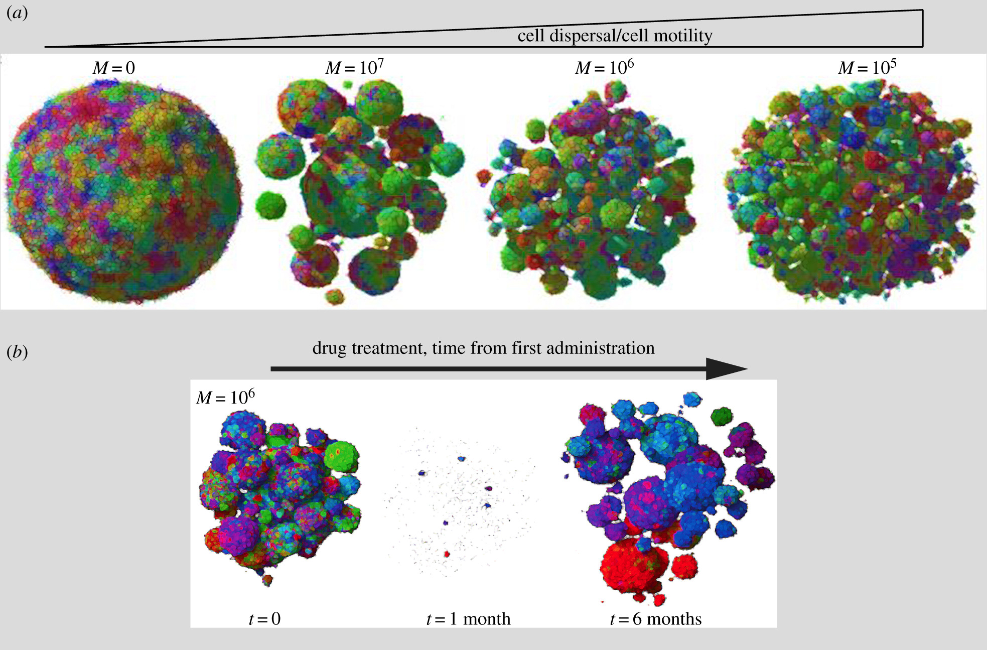 Is cell migration a selectable trait in the natural evolution of