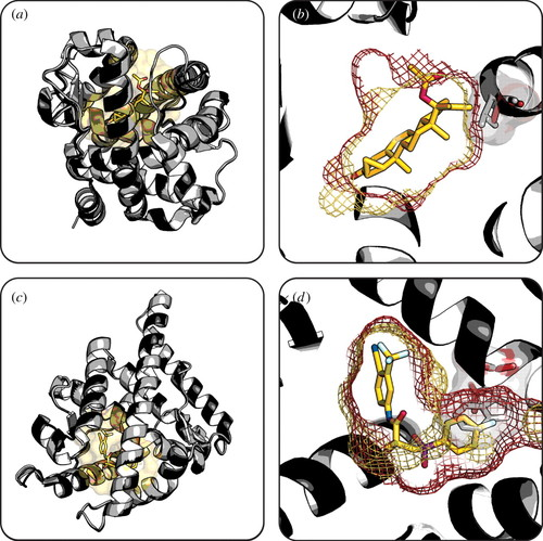 Bioinformatics and variability in drug response: a protein