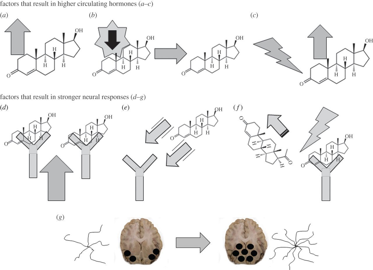 Evolving the neuroendocrine physiology of human and primate