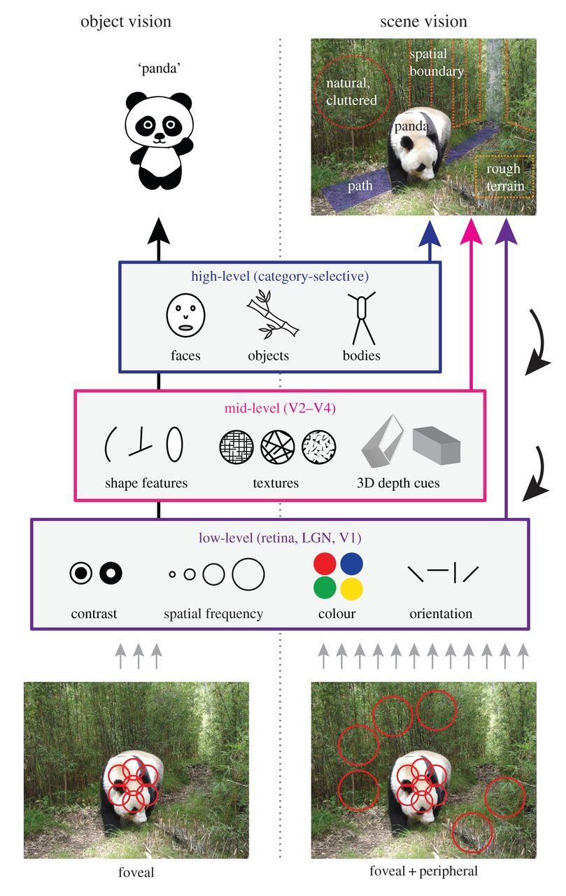 Contributions of low- and high-level properties to neural