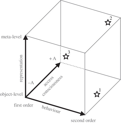 Metacognition: computation, biology and function