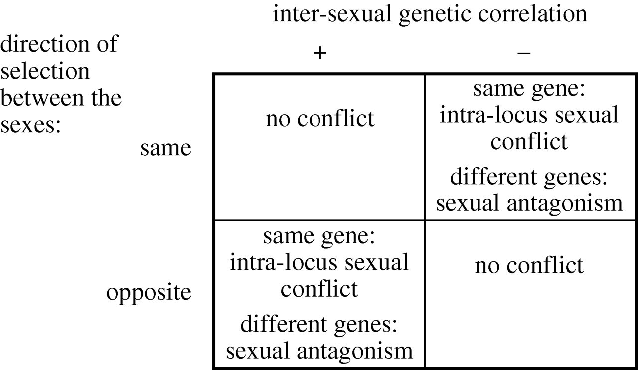 Inter sexual definition