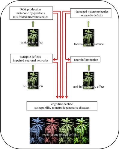 The endocannabinoid system in normal and pathological brain