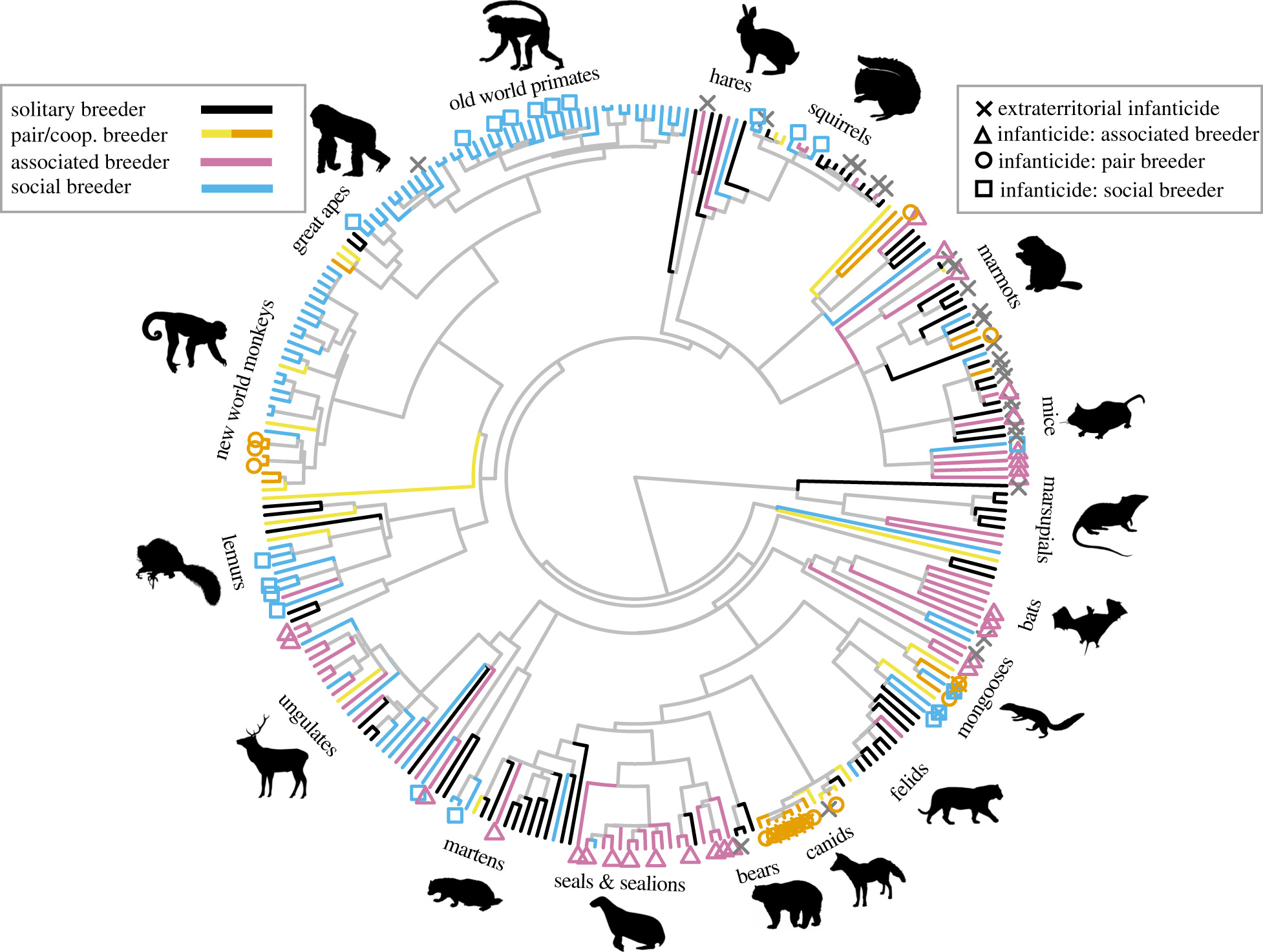The evolution of infanticide by females in mammals