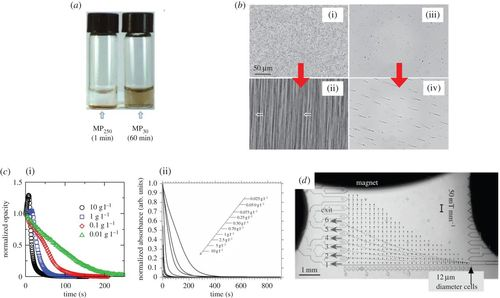 Working principle and application of magnetic separation for ... on