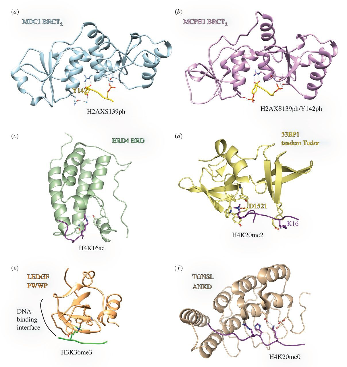 Reading chromatin signatures after DNA double-strand breaks