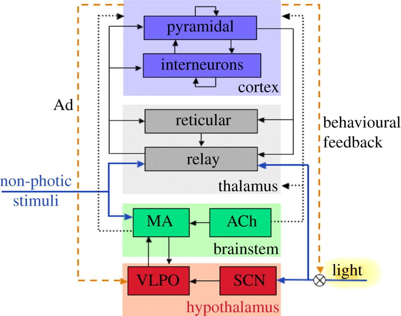 Quantitative Modelling Of Sleep Dynamics Philosophical Relay Dark Activated Download Figure