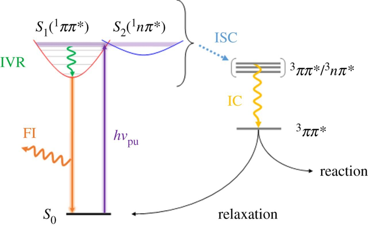 Photophysics of sunscreen molecules in the gas phase: a
