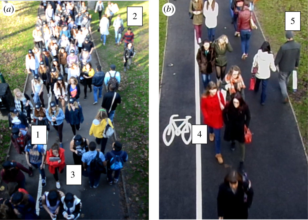 A Comparative Study of Crowd Behaviour at Two Major Music Events