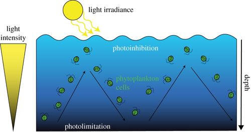 How do microalgae perceive light in a high-rate pond