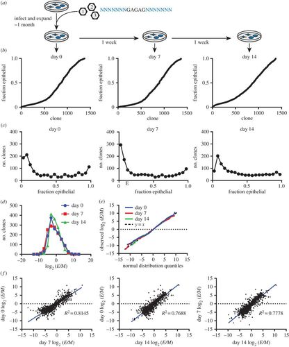 Cancer cells exhibit clonal diversity in phenotypic