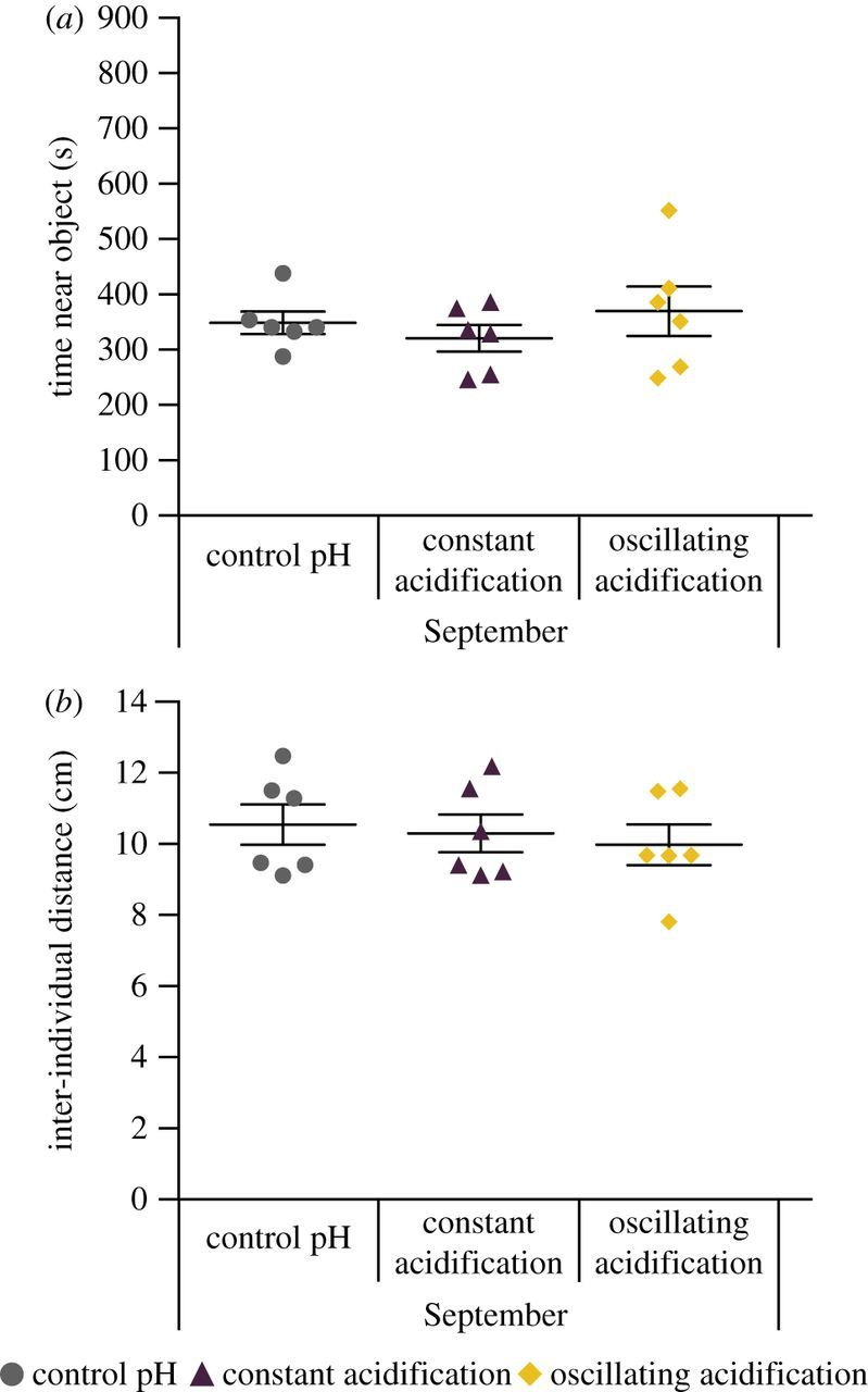 CO2-induced ocean acidification does not affect individual or group