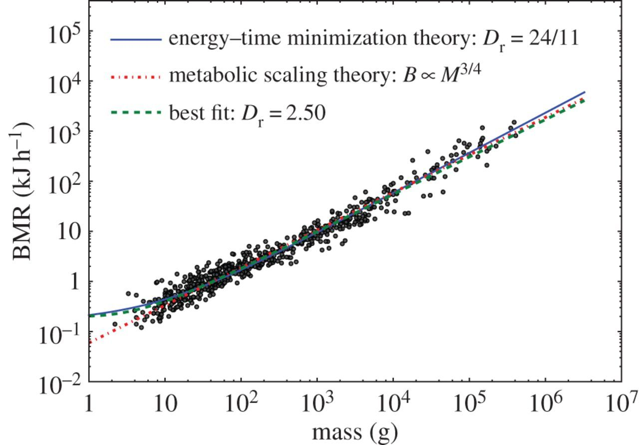 Energy and time determine scaling in biological and computer designs