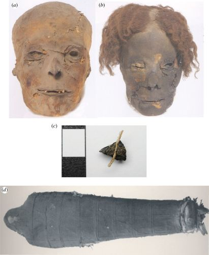 fdc83b45447 The significance of petroleum bitumen in ancient Egyptian mummies ...