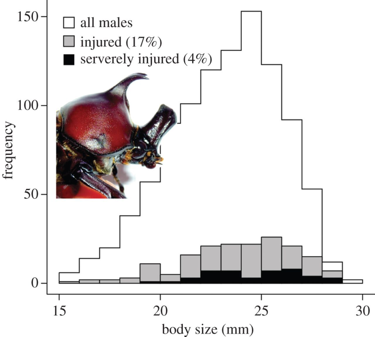 Mechanical Limits To Maximum Weapon Size In A Giant Rhinoceros Beetle Diagram Related Keywords Suggestions Long Download Figure