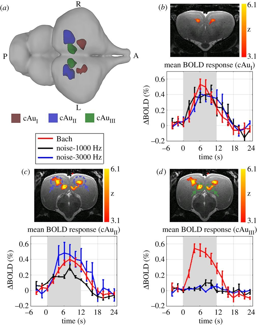 bd177b6f2d6a Functional MRI in the Nile crocodile  a new avenue for evolutionary ...