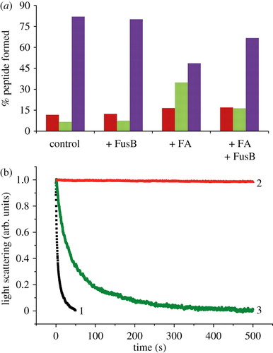 Structure and function of FusB: an elongation factor G