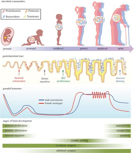Sex differences in the gut microbiome–brain axis across the
