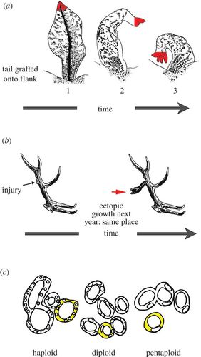 Top-down models in biology: explanation and control of