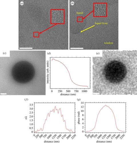 Off-axis electron holography of bacterial cells and magnetic