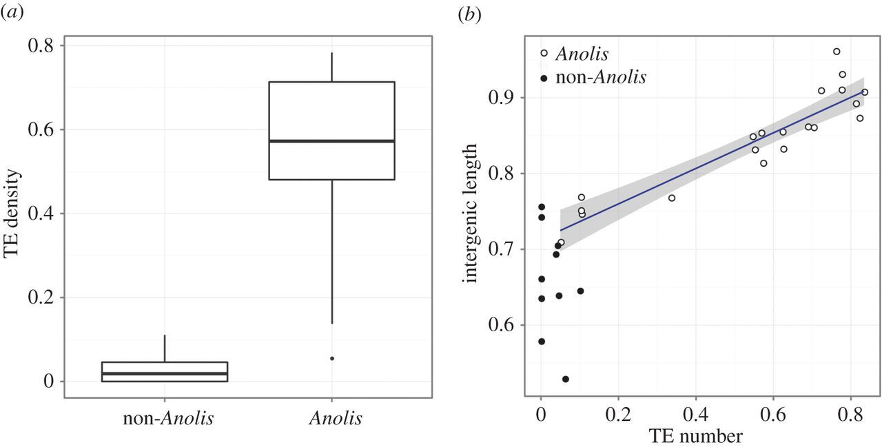 Accumulation of transposable elements in Hox gene clusters