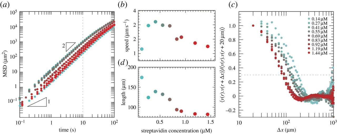 Tunable dynamics of microtubule-based active isotropic gels