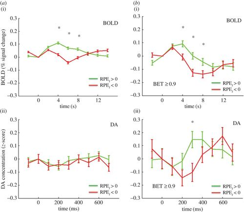 BOLD and its connection to dopamine release in human striatum: a