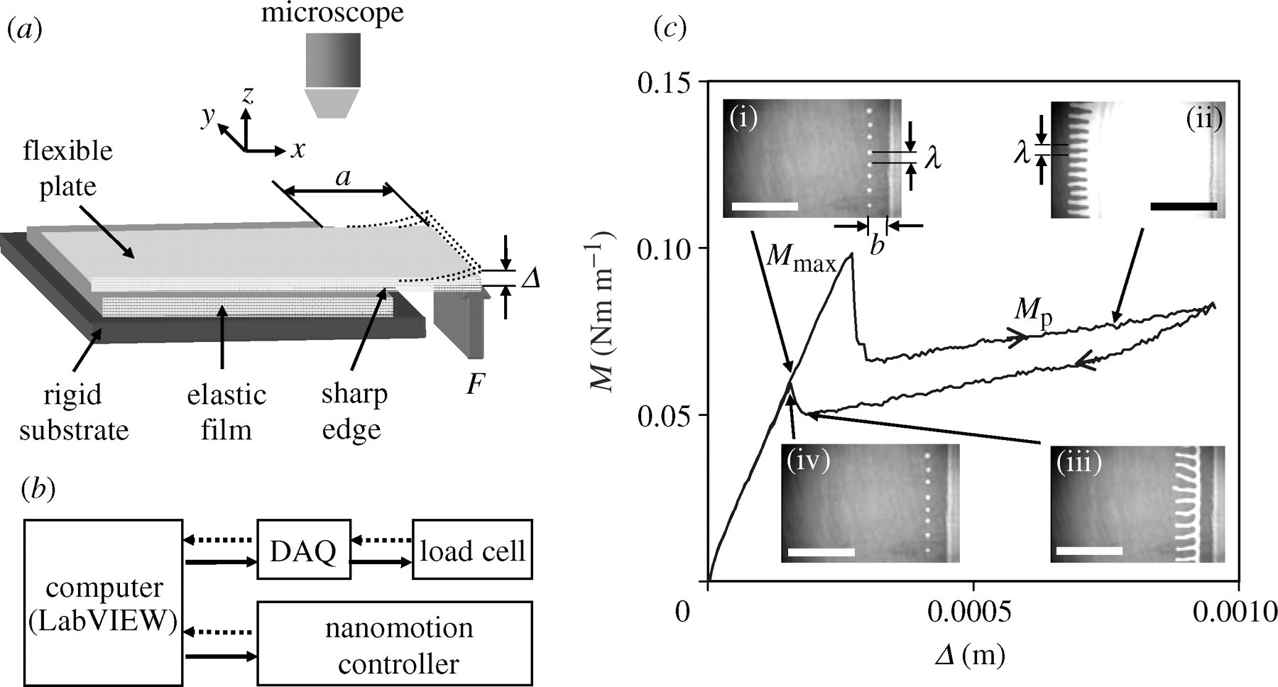 Roles of discontinuities in bio-inspired adhesive pads | Journal of