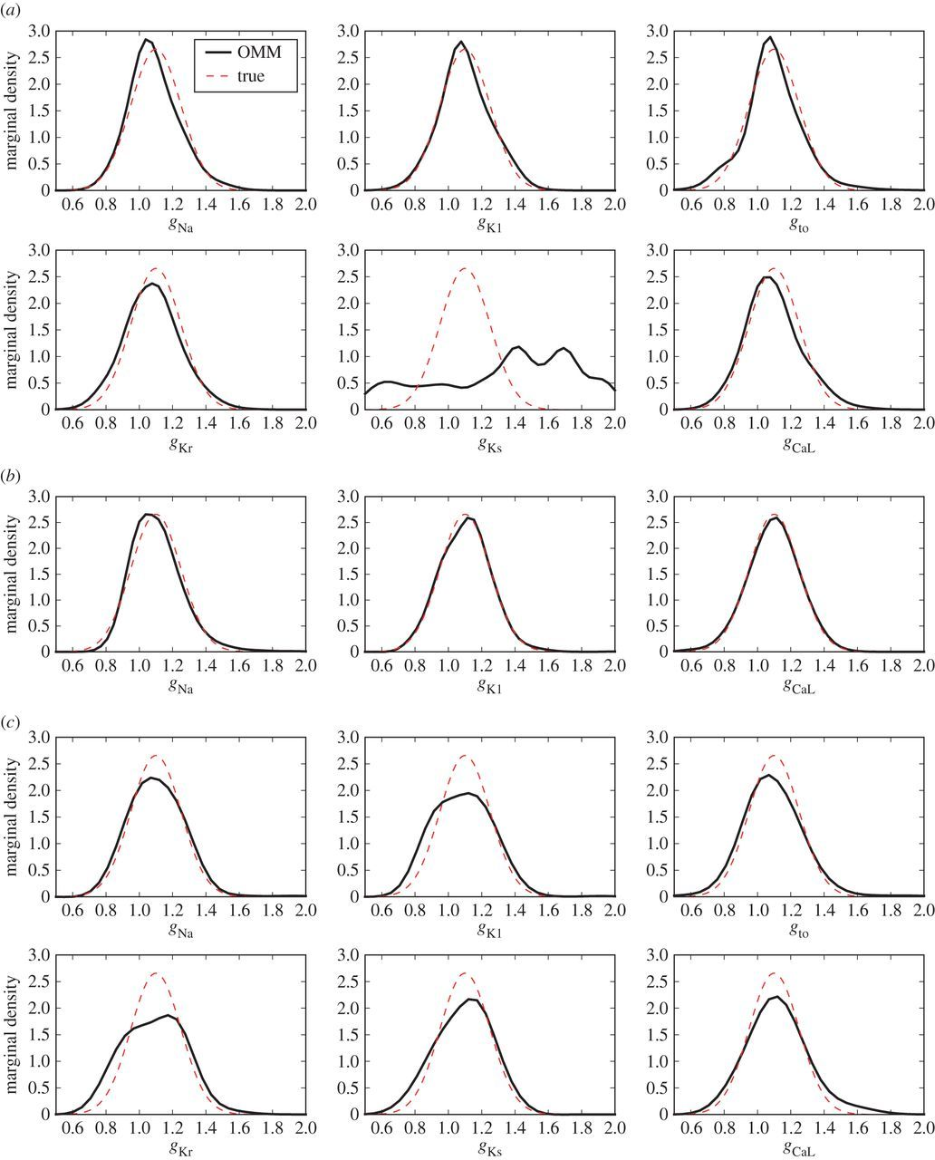 Modelling variability in cardiac electrophysiology: a moment