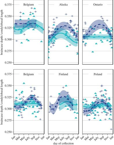 Growth overshoot and seasonal size changes in the skulls of