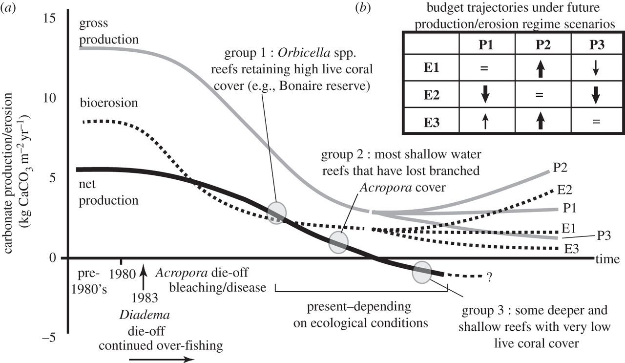 changing dynamics of caribbean reef carbonate budgets emergence of