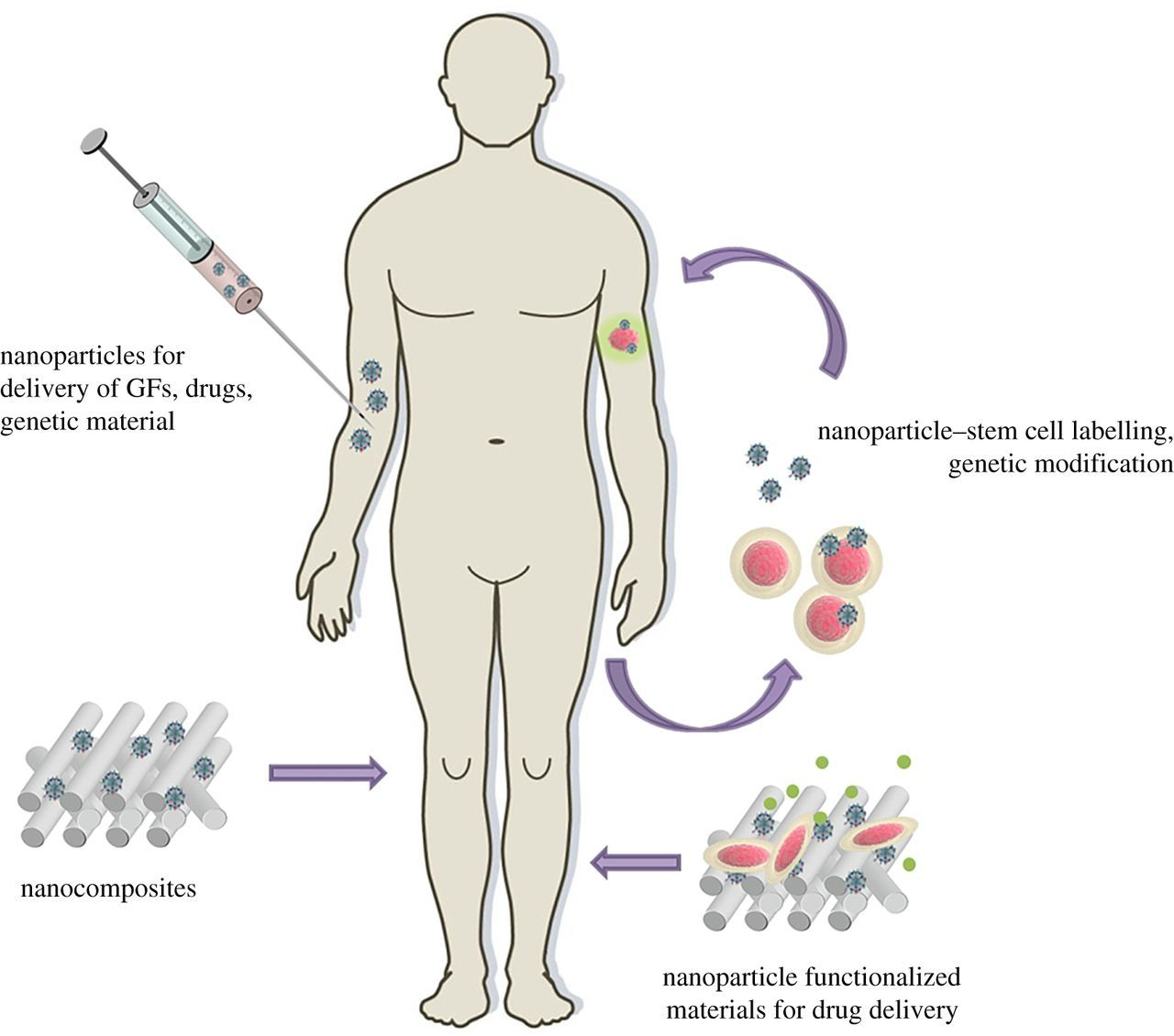 Enhancing regenerative approaches with nanoparticles   Journal of