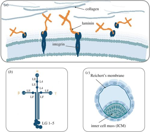 Developing defined substrates for stem cell culture and