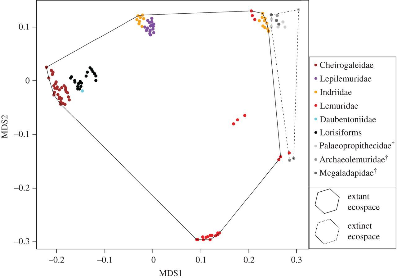 Testing the adaptive radiation hypothesis for the lemurs of