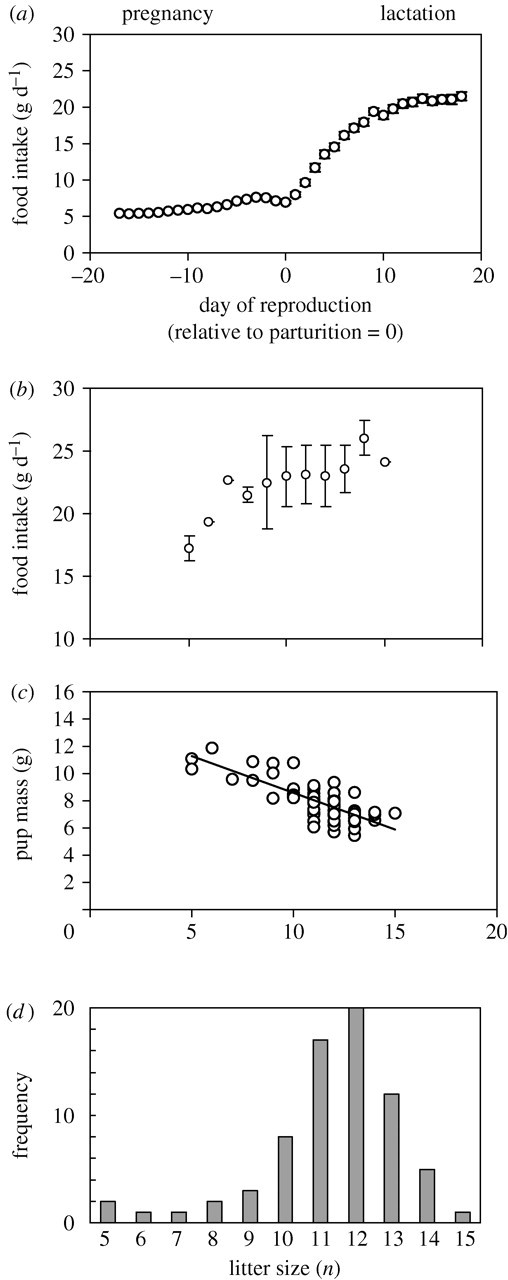 The physiological costs of reproduction in small mammals