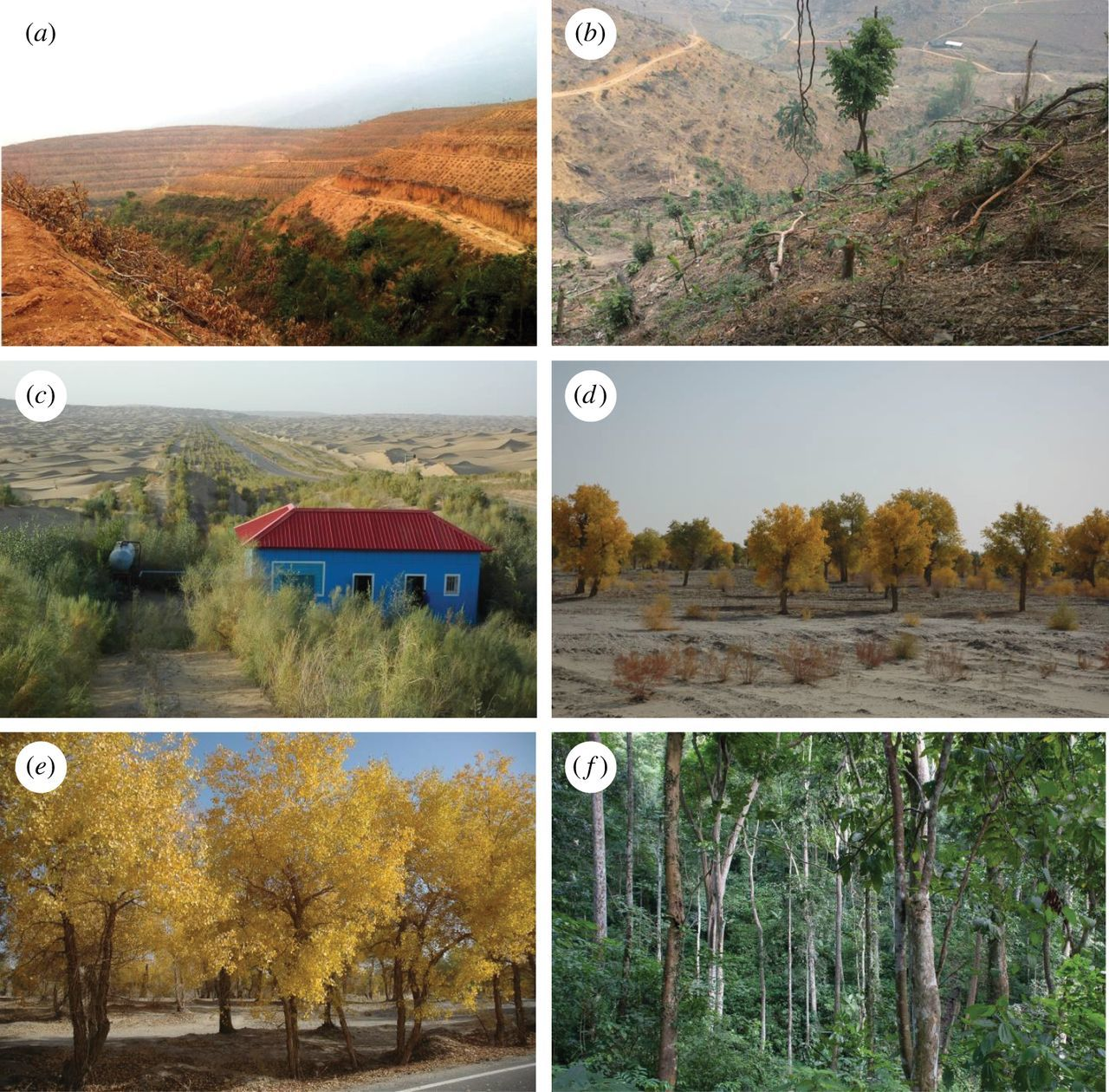 China's fight to halt tree cover loss | Proceedings of the