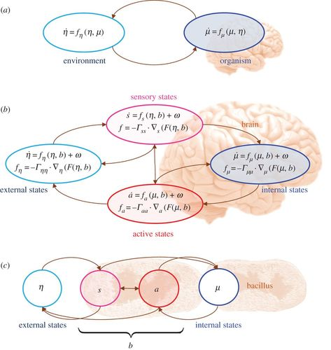 A variational approach to niche construction | Journal of