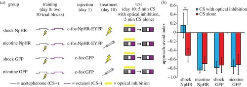Manipulating neural activity in physiologically classified