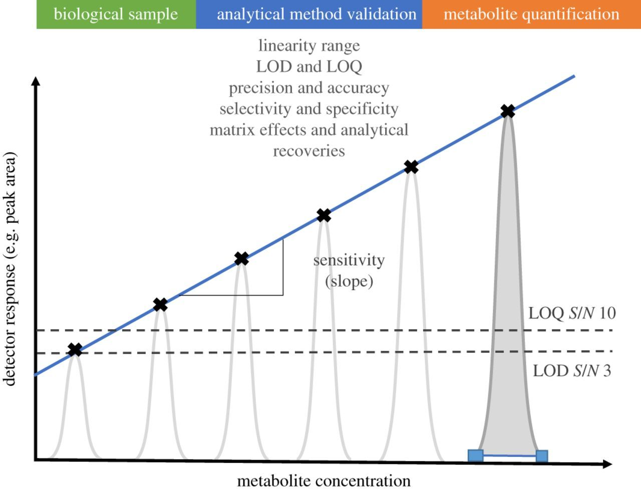 Mass spectrometry as a quantitative tool in plant metabolomics