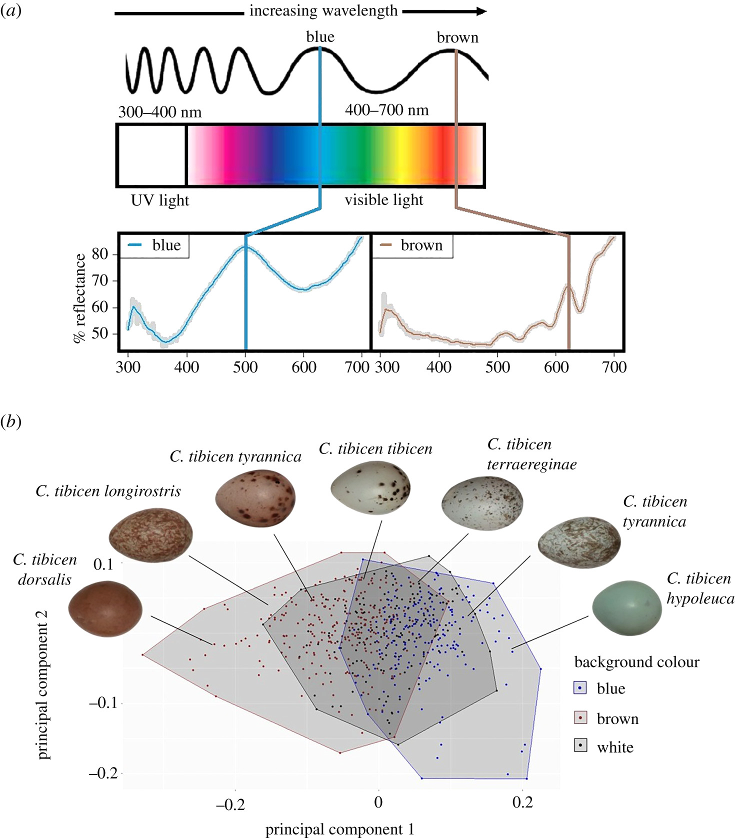 Unscrambling variation in avian eggshell colour and